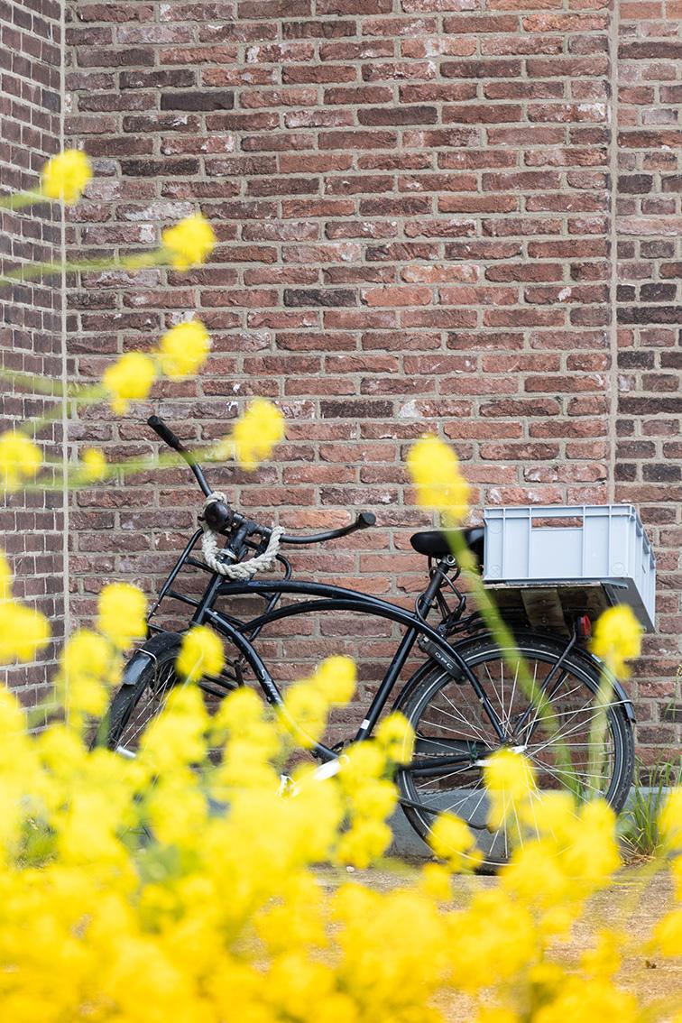 40plusvriendinnen, erfgoed, kinderdijk, fiets